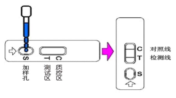 三聚氰胺快速检测卡(饲料)检测过程