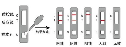 胶体金检测技术