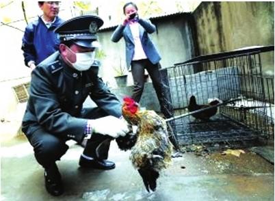 H7N9感染者