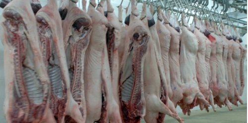 生猪非法屠宰